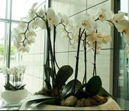 orchid reception.jpg